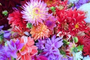 flowers-937628_640
