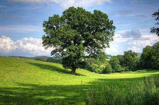 tree-402953_640