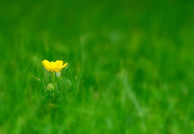 flower-1204185_640