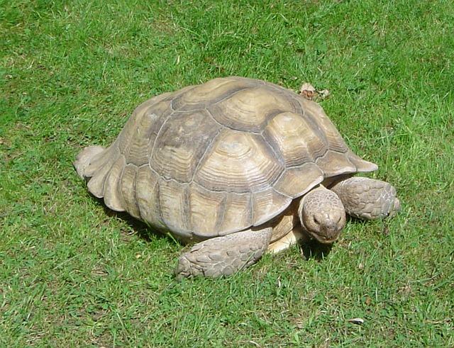 turtle-255271_640