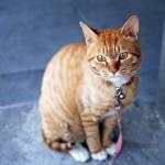 猫好きをビジネスに応用したサイト