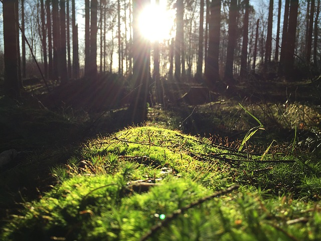 forest-1149876_640
