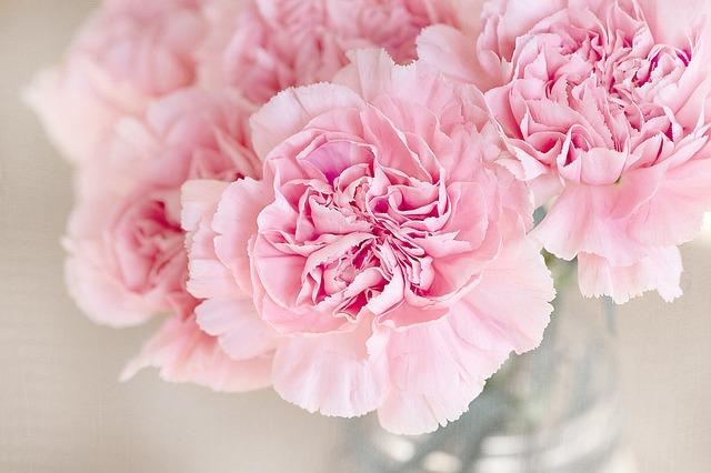 flowers-1325012_640