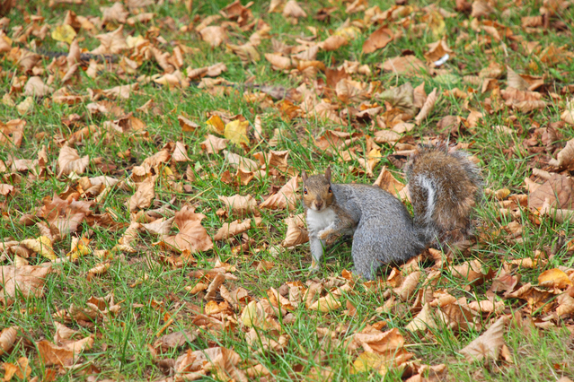 squirrel-1362434-639x425
