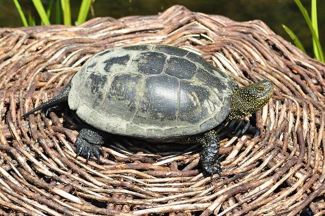 turtle-224198_640