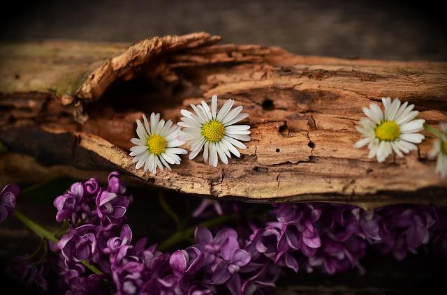 wood-1406895_640