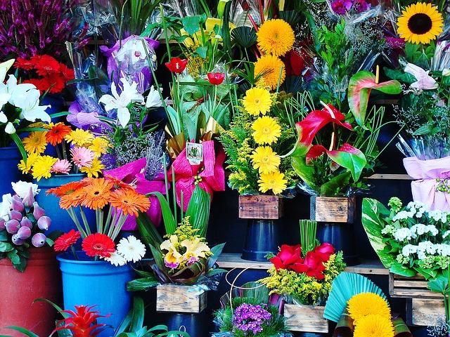 flowers-1384623_640