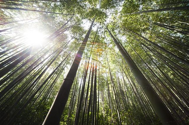 bamboo-364112_640