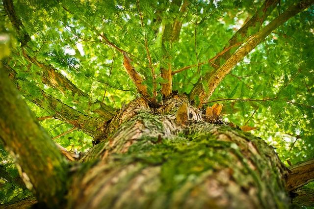tree-1750784_640